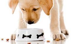 Hrană pentru câini